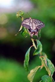Butterfly090704_1