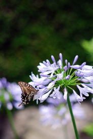 Butterfly090704_2
