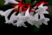 Close_up090707_4