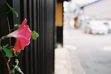 Kyoto100928_5