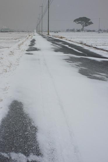 Snow110116_2