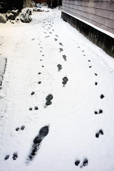 Snow110117_1