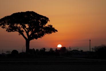 Sun_rise110129_1