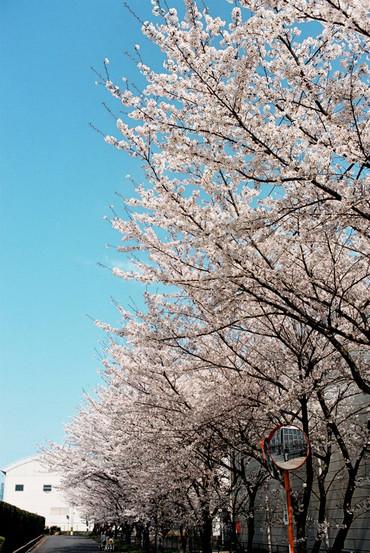 Ishiyakushi110409_2