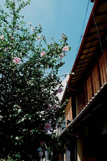 Kyoto110828_5