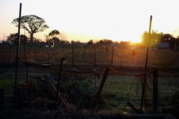 Sun_rise11112628mm_2