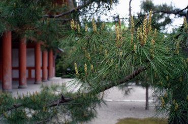Kyoto12050128mmf35_17