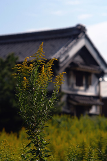 Chiyozaki121014105cm_1