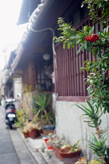 Kyoto130103summaron35cmf35_1