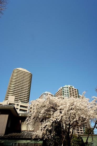 Tokyo130302gr28mmf25_2