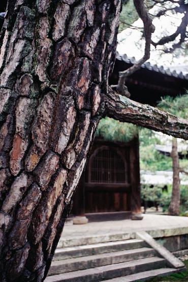 Kyoto130602nikkors_auto35cmf28_1