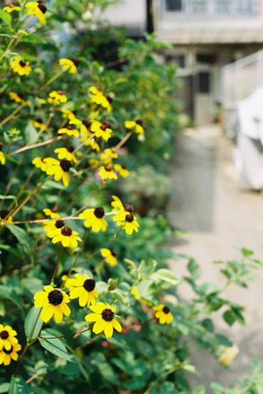 Kyoto130808nikkoro_auto35mmf2_1